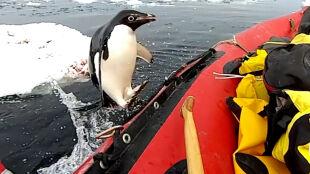 Hop i już jest w pontonie. Takiego gościa się nie spodziewali