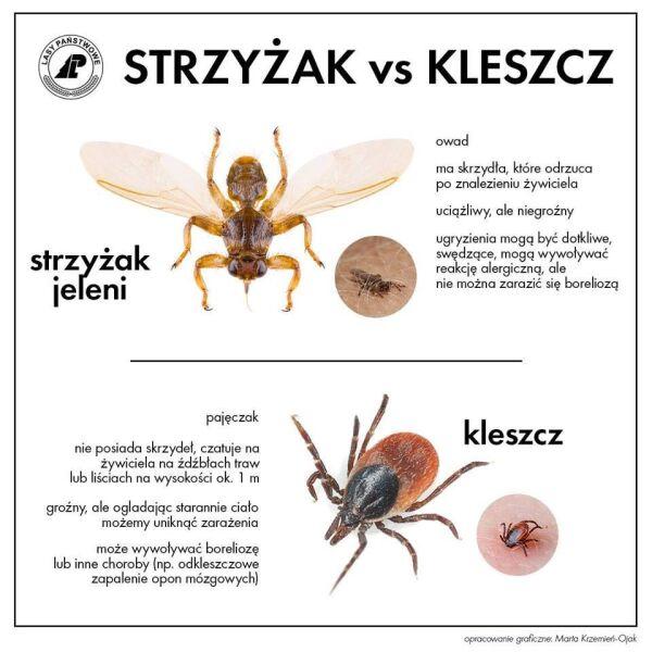 Strzyżak vs kleszcz (Lasy Państwowe)