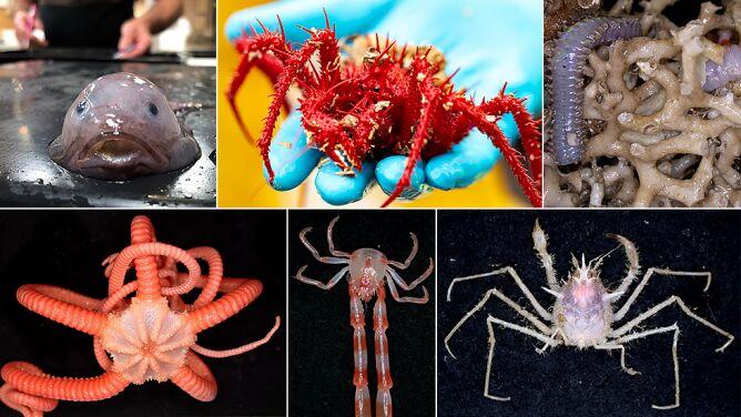 Ukrywały się w głębinach. Niezwykłe odkrycie u wybrzeży Tasmanii