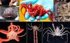 Naukowcy odkryli nowe stworzenia na dnie oceanu